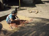 Asisbiz Hmawbi monastery Lizard Jul 2001 17