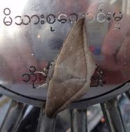 Asisbiz Myanmar Mon State Kyaiktiyo pagoda moths Dec 2009 02