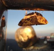 Asisbiz Myanmar Mon State Kyaiktiyo pagoda moths Dec 2009 03