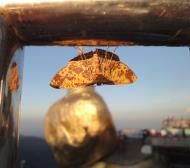 Asisbiz Myanmar Mon State Kyaiktiyo pagoda moths Dec 2009 04