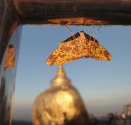 Asisbiz Myanmar Mon State Kyaiktiyo pagoda moths Dec 2009 05