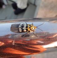 Asisbiz Myanmar Mon State Kyaiktiyo pagoda moths Dec 2009 07