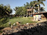 Asisbiz Meilamu Pagoda feeding the Pigeons Yangon Myanmar 01