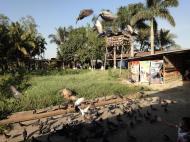 Asisbiz Meilamu Pagoda feeding the Pigeons Yangon Myanmar 02