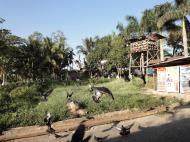 Asisbiz Meilamu Pagoda feeding the Pigeons Yangon Myanmar 04