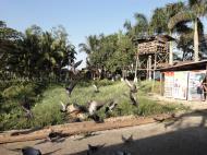 Asisbiz Meilamu Pagoda feeding the Pigeons Yangon Myanmar 06