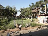 Asisbiz Meilamu Pagoda feeding the Pigeons Yangon Myanmar 07