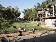Asisbiz Meilamu Pagoda feeding the Pigeons Yangon Myanmar 08
