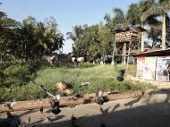 Asisbiz Meilamu Pagoda feeding the Pigeons Yangon Myanmar 09