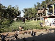 Asisbiz Meilamu Pagoda feeding the Pigeons Yangon Myanmar 10