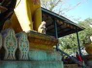 Asisbiz Mandalay Mount Popa Monkeys macaques Dec 2000 02