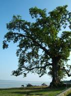 Asisbiz Ayeyarwaddy river scenes Mingun area Nov 2004 03