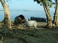 Asisbiz Ayeyarwaddy river scenes Mingun area Nov 2004 08