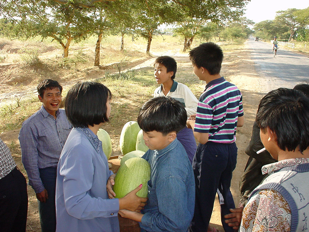 Myanmar Sagaing agriculture and farming watermelons 02