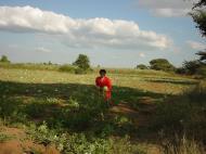 Asisbiz Myanmar Sagaing agriculture and farming watermelons 01