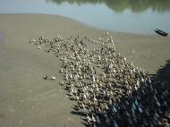 Asisbiz Myanmar Amarapura Mandalay Thaungthaman lake Jan 2001 11