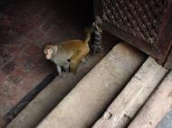 Asisbiz Swayambhunath temple monkey pagoda Kathmandu Sep 2000 18