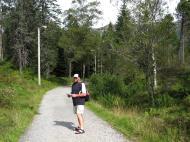 Asisbiz Norwegian Birch trees Norway 05