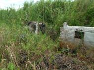 Asisbiz C 47 Dakota USAAF 5AF 42 23659 crash site PNG Oct 2002 15