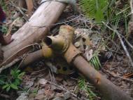 Asisbiz PNG Wreck Hunting P 39 Aircobra crash site Nov 2002 06
