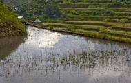 Asisbiz Banaue Batad Rice Terraces Ifugao Province Philippines Aug 2011 21