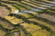 Asisbiz Banaue Batad Rice Terraces Ifugao Province Philippines Aug 2011 26