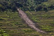 Asisbiz Banaue Batad Rice Terraces erosion damage caused by storms end July 2011 01