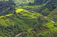 Asisbiz Banaue Rice Terraces Ifugao Province Philippines Aug 2011 05
