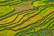 Asisbiz Banaue Rice Terraces Ifugao Province Philippines Aug 2011 17