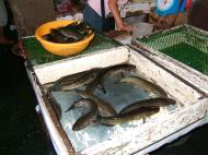 Asisbiz Calapan markets are open most days Oriental Mindoro Philippines Jan 2006 03