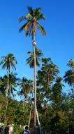Asisbiz Attaching the guide rope and removing the top Tabinay Oriental Mindoro Philippines 11