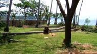 Asisbiz Fallen giants Tabinay Oriental Mindoro Philippines 04