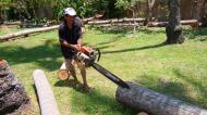Asisbiz Step by step guide on how to cut straight using chainsaw to produce coco lumber Philippines 01