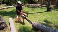 Asisbiz Step by step guide on how to cut straight using chainsaw to produce coco lumber Philippines 02