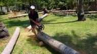 Asisbiz Step by step guide on how to cut straight using chainsaw to produce coco lumber Philippines 04