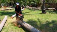 Asisbiz Step by step guide on how to cut straight using chainsaw to produce coco lumber Philippines 05