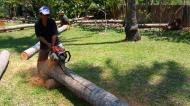 Asisbiz Step by step guide on how to cut straight using chainsaw to produce coco lumber Philippines 06