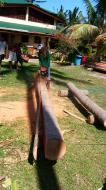 Asisbiz The master shows step by step how to cut straight using chainsaw to produce coco lumber Philippines 06