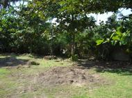 Asisbiz Using a Hitachi Backhoe to remove coco tree stumps Tabinay Philippines 05