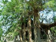Asisbiz Philippines Corregidor Island Topside Barracks ruins Jan 2005 05