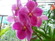 Asisbiz Cebu Moalboal Orchid Farm Dec 2005 02
