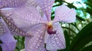 Asisbiz Cebu Moalboal Orchid Farm Dec 2005 04