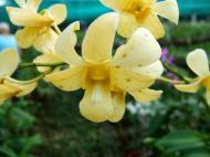 Asisbiz Cebu Moalboal Orchid Farm Dec 2005 08