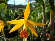 Asisbiz Cebu Moalboal Orchid Farm Dec 2005 10