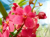 Asisbiz Cebu Moalboal Orchid Farm Dec 2005 14