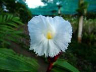 Asisbiz Cebu Moalboal Orchid Farm Dec 2005 29