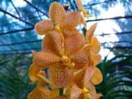 Asisbiz Cebu Moalboal Orchid Farm Dec 2005 37
