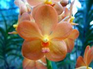 Asisbiz Cebu Moalboal Orchid Farm Dec 2005 40