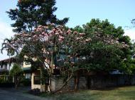 Asisbiz Philippines Manila Muntinlupa Ayala Alabang Homes 2008 03
