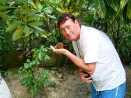 Asisbiz Endangered Philippine Tarsier Tarsius syrichta Maumag Cebuano Visayan 06